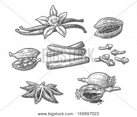 Set of spices. Anise star cardamom clove cinnamon stick fruits of cocoa beans vanilla stick and flower poppy heads and seeds. Isolated on white background. Vector black vintage engraving illustration.