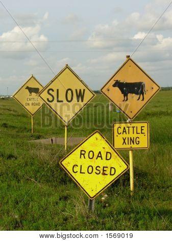 Cattlexing