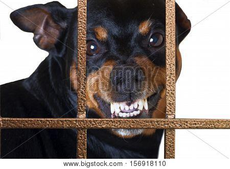 dog growling guard behind a gate house