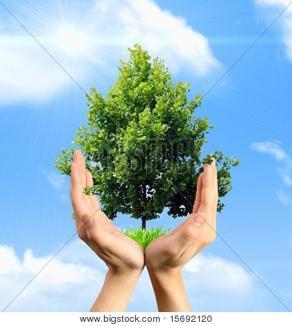 Eco concept - hands holding a tree against a blue sky