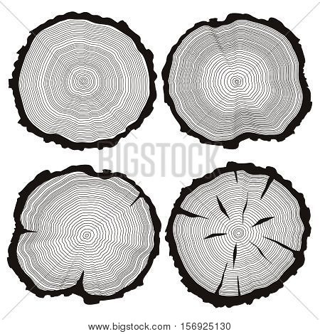 Vector tree rings set, concept of saw cut pine, fir-tree trunk, hand drawn slice, sawmill flat icons, wooden texture illustration isolated on white background.