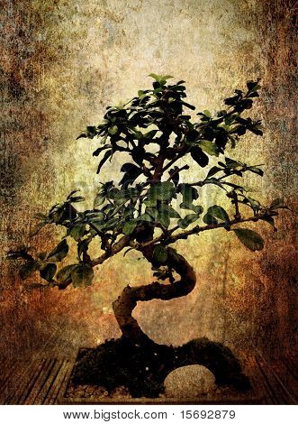 Bonsai tree on grungy textured old  paper