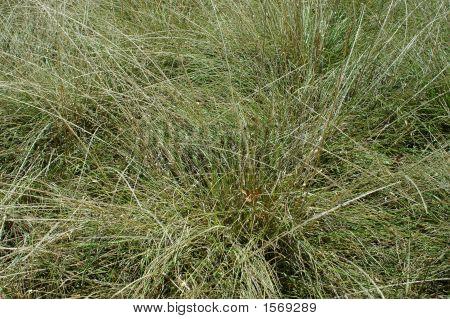 Close-Up Desert Grass