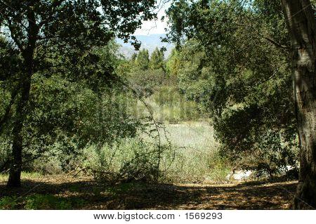Shady Oak Grove 183