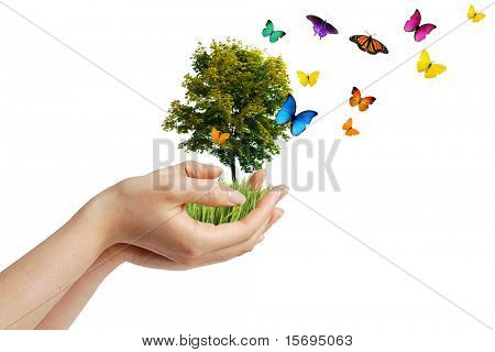 Hands holding a tree with butterflies - eco concept