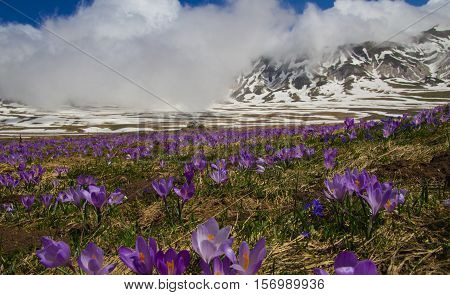 Beautiful mountain landscape with crocus flowers and clouds