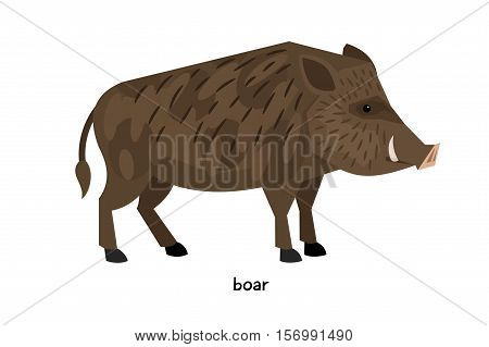 Thick wild boar with short legs standing