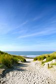 picture of dune grass  - beach with sand dunes and a path to the sea - JPG