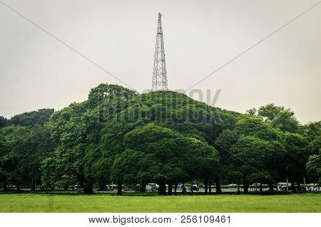 Old Oak Trees On Meadows