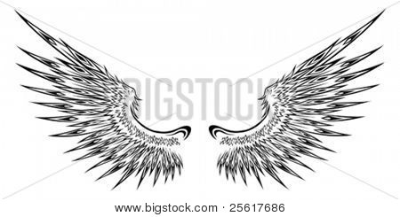 Detailed wing illustration