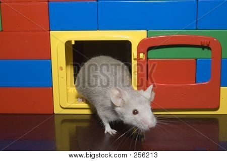 Mouse In Doorway