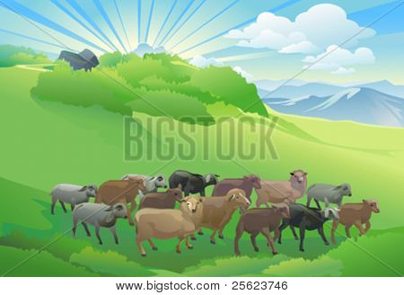 SHEEP HERD  GRAZING ON BEAUTIFUL HILL