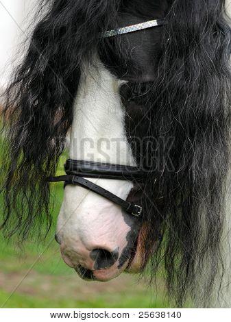 Tinker Pony
