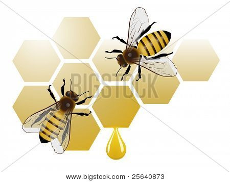 Two bees on honeycomb with honey