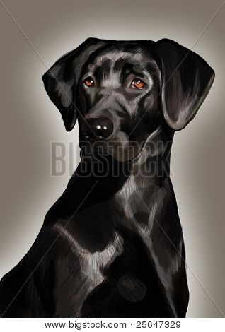 portrait of pure-blooded black labrador dog