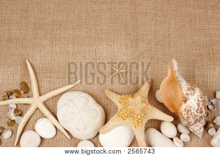 Sea Shells And Star Fish Postcard