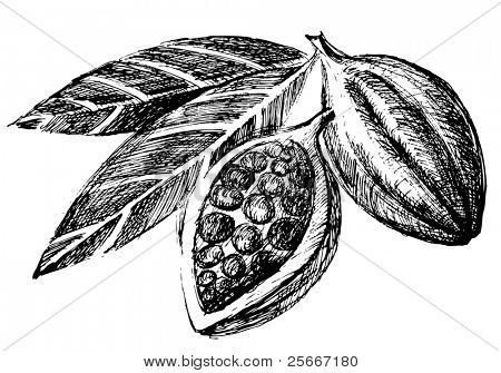 hand drawn cacao beans icon