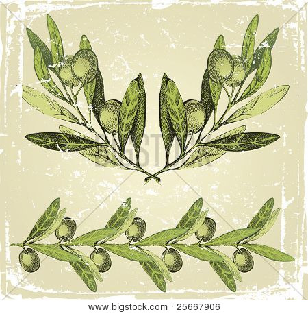 hand drawn olive branches ornament