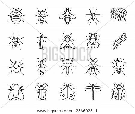 Danger Insect Thin Line Icons