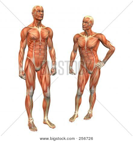 Muscle Man 2 W/ Clipping Mask