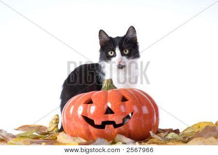 Halloween Pumpkin And A Black-White Cat