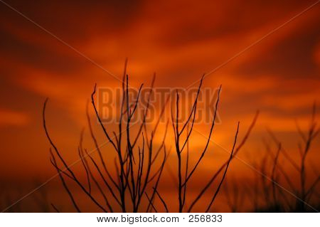 Sunset Twigs