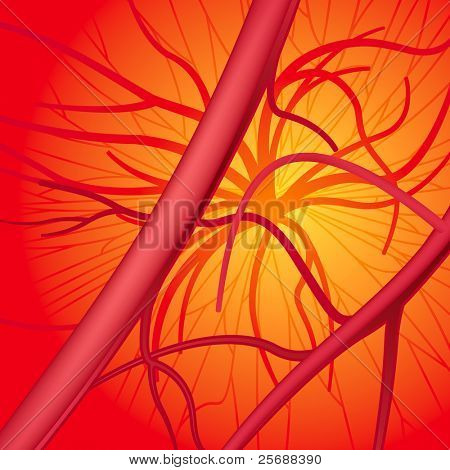 Circulatory system. Vector Illustration (EPS v.8.0)