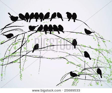 Silhouettes of birds sitting on branches
