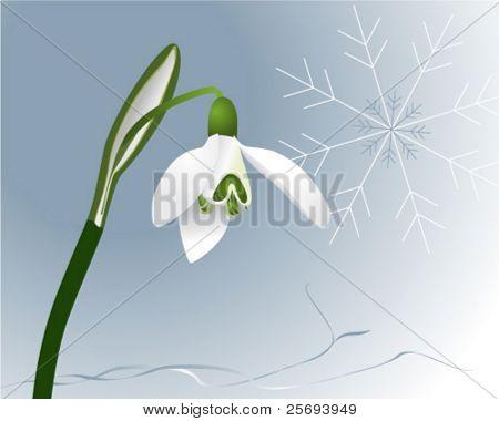 Vector illustration of a snowdrop