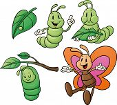 stock photo of caterpillar cartoon  - Butterfly life cycle - JPG