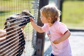 Adorable Cute Toddler Girl Feeding Little Goats And Sheeps On A Kids Farm. Beautiful Baby Child Pett poster