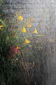 Watering Flowers In Garden. Woman Gardener Watering Plants In Summer Garden. Close Up Of Beautiful Y poster