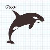 Hand Drawn Vector Killer Whale. Sketch Illustration poster