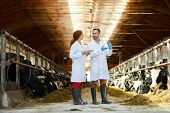 Full length  portrait of two veterinarians wearing lab coats working at farm giving vaccine shots to poster