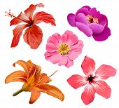 stock photo of hawaiian flower  - Flowers bloom - JPG