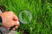 Studying Of A Green Grass Through Magnifying Glass In A Male Hand, Ecology, Botany poster