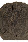 A Handmade Oak Souvenir, An Oak Texture With Cracks. poster
