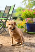 Little cute cross breed dog outdoor in the garden poster