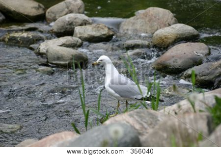 Sad Seagull