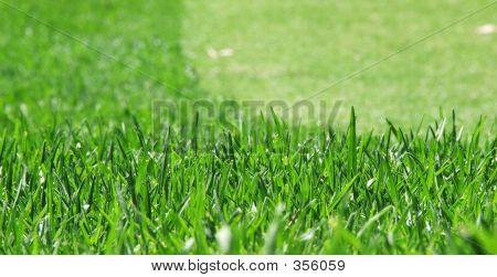 Grass Mown