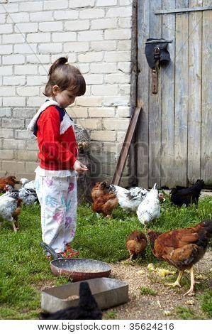 Girl Feeding Chickens