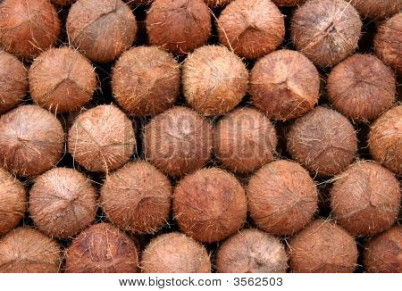 Stalked Coconuts