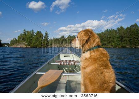 Dog In His Canoe.