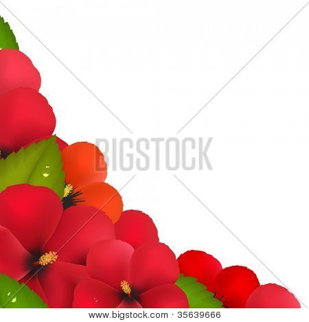 Red Hibiscus Flowers With Leaf Border, Isolated On White Background, Vector Illustration