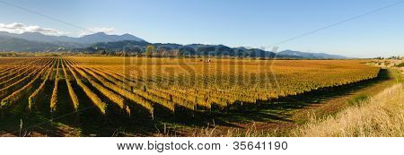 Panoramic view of the vineyards in the Marlborough district of New Zealand's South Island