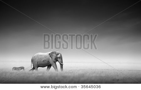 Elephant with zebra behind on open plains of Etosha (Artistic processing)