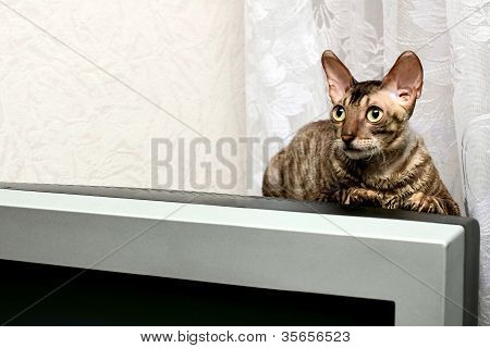 Cat on crt display