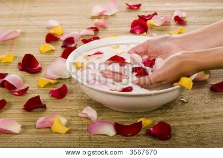 Hand And Rose Petals