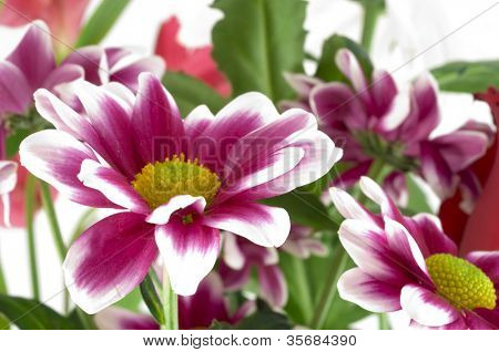 Chrysanthemums in a bouquet. fragment