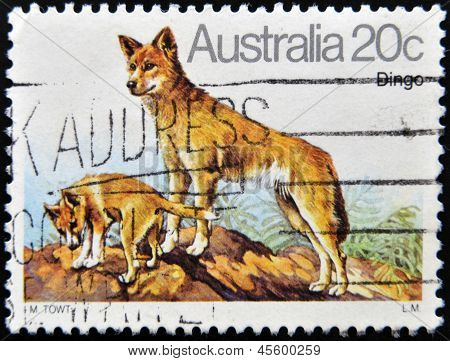 A stamp printed in Australia shows Australian Dingo Dog